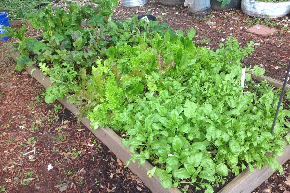 The Beatlanta Garden: Lettuce Abound