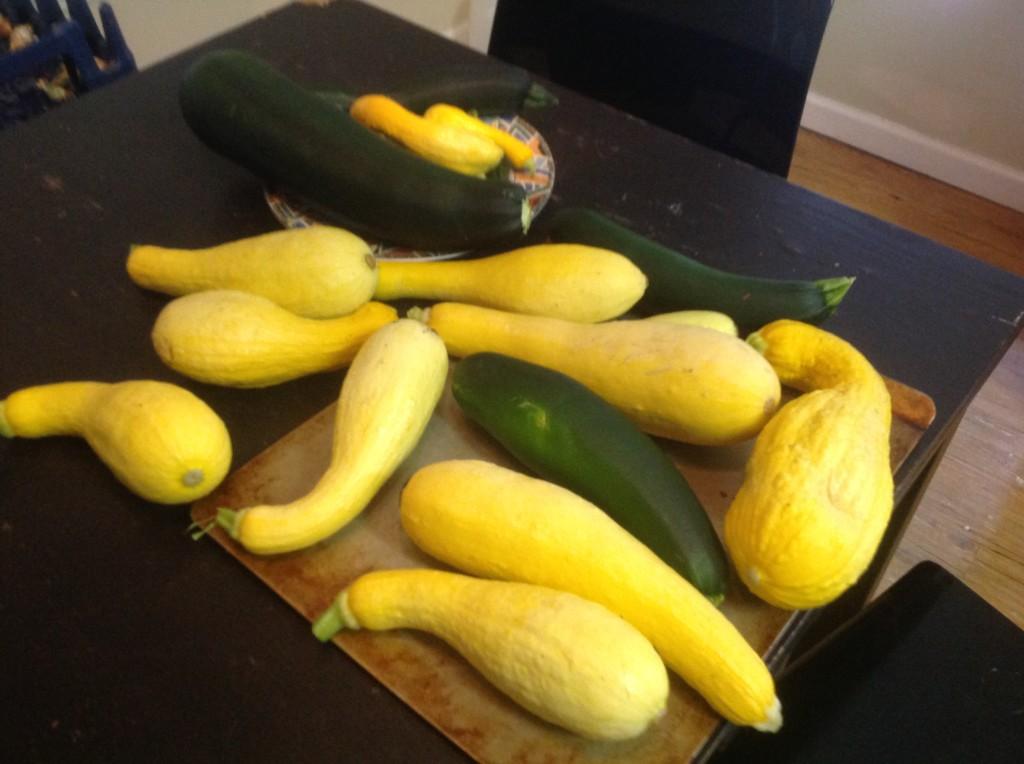 [garden] squash 7.8.14 7