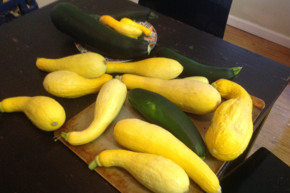 BEATLANTA GARDEN: The Squash is in!